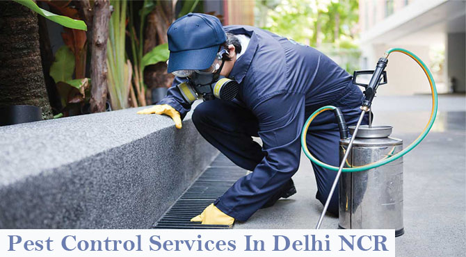 pest control services In Delhi NCR