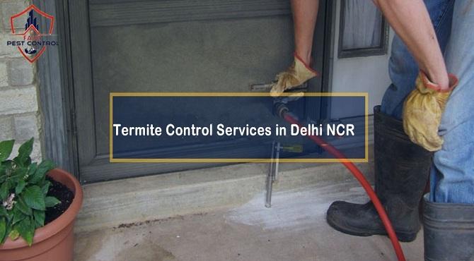 Termite control services in Delhi Ncr